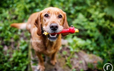 Bodhi and his person – Sydney Dog Photography