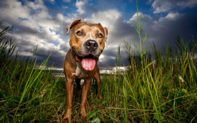 My own pack of misfits | Sydney Pet Photography