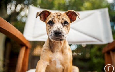 Adopt me 02.16 | Sydney Dog Photographer