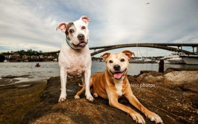 Tails of Sydney outtakes 11-20 | Sydney Dog Photographer