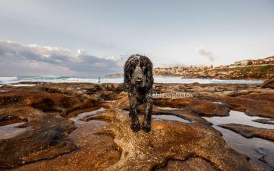 before & after #4 | sydney dog photographer