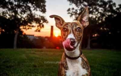 Tails of Sydney outtakes 21-30 | Sydney Dog Photographer