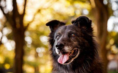 miffy | canberra dog photographer