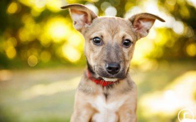 adopt me 04.16 | sydney dog photographer