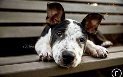 EOFY charitable donations | Sydney Dog Photographer