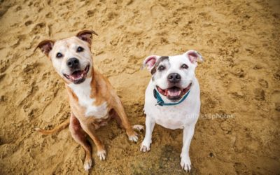 Bindi and Cosmo | Sydney Pet Photography