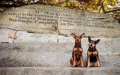 Mint and Jazz (again!) | Sydney Dog Photographer