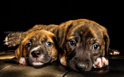 Sleepy puppies | Sydney Puppy Photographer