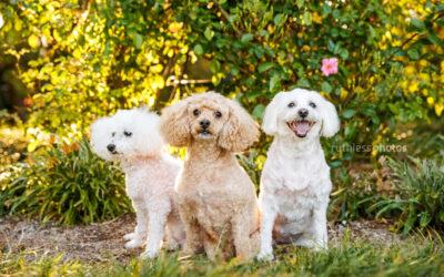 Tali, Peaches and Wilson | Sydney Pet Photos