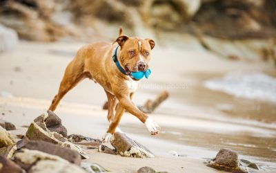 The dog previously known as Flatley   Dog Photos Sydney