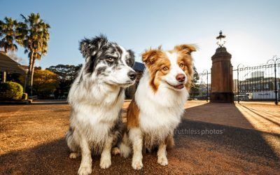 Keely and Gryffin | Sydney Dog Photographer