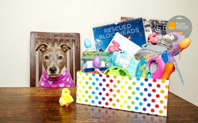 Easter Competition Time | Dog Photos Sydney