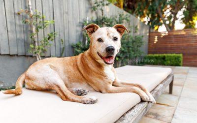 Remembering Bindi | Sydney Dog Photographer
