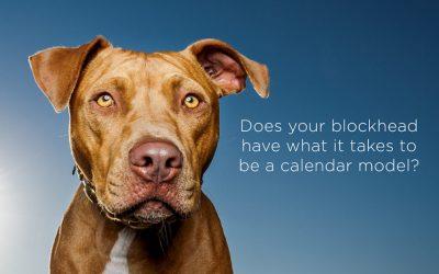 Rescued Blockheads calendar – dog model call