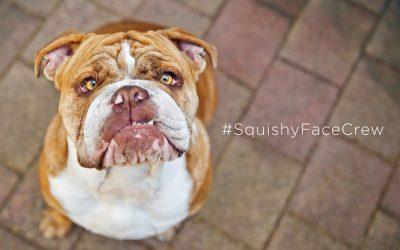 #SquishyFaceCrew book – applications open