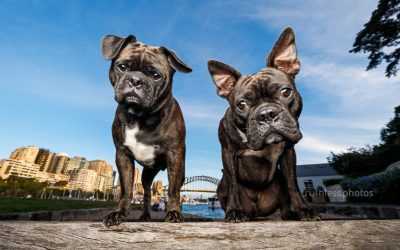 Rex and Hercule | Dogs of Sydney