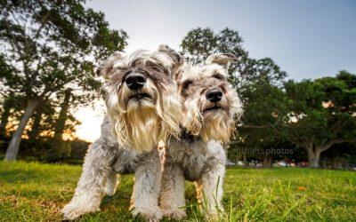 Bella and Beryl | Sydney Dog Photographer