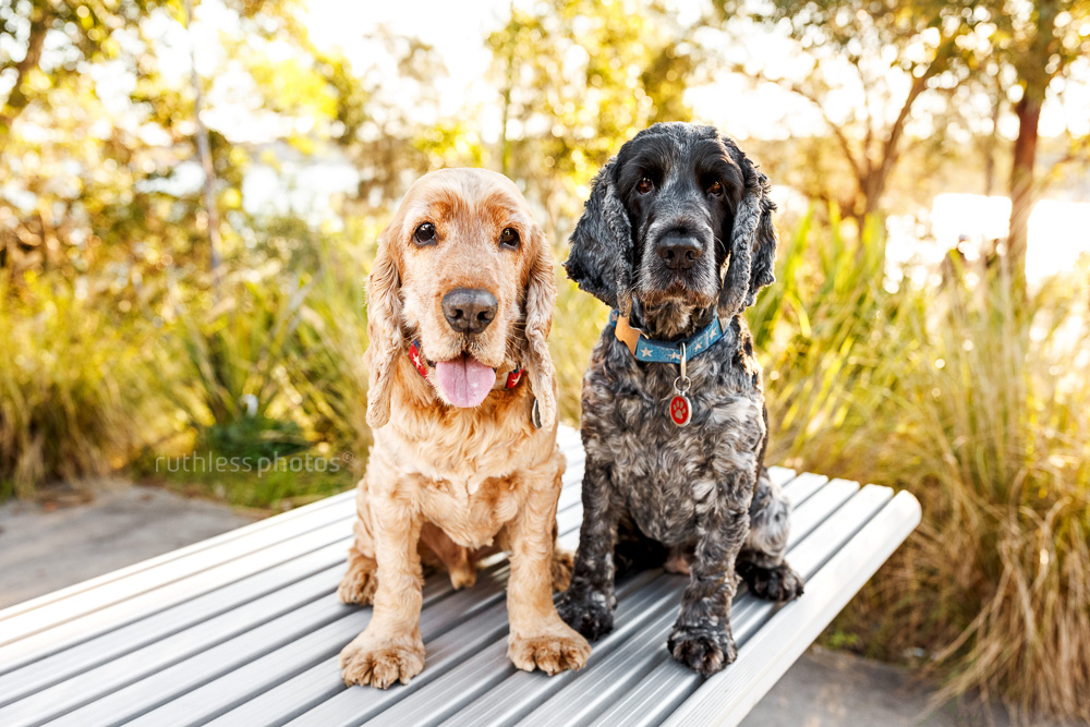 two dogs sitting on a metal picnic table at park