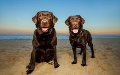before & after #5 – Wollongong Dog Photographer