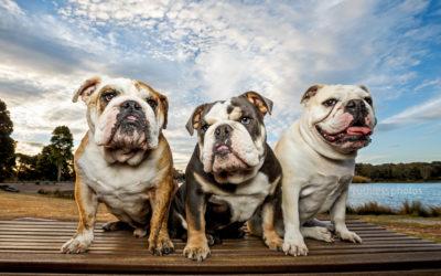 Maibelle, Maxwell & Hugo – Sydney Pet Photos