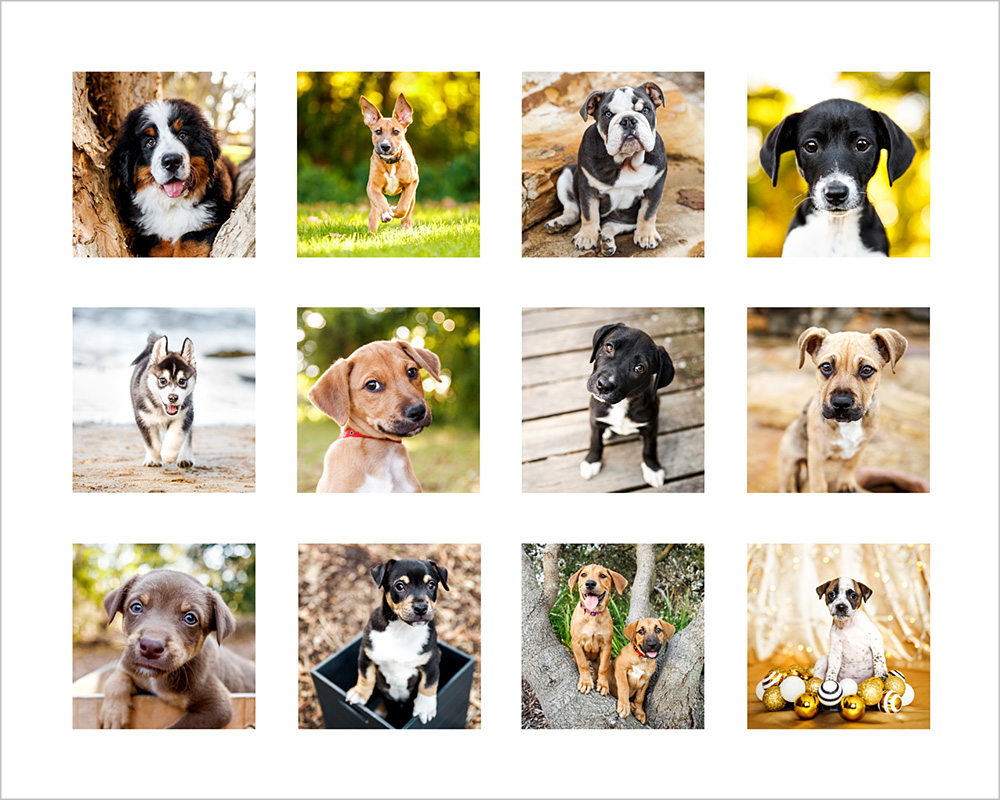 2018 cute puppies diary