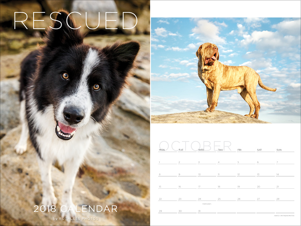 2018 rescue dog calendar