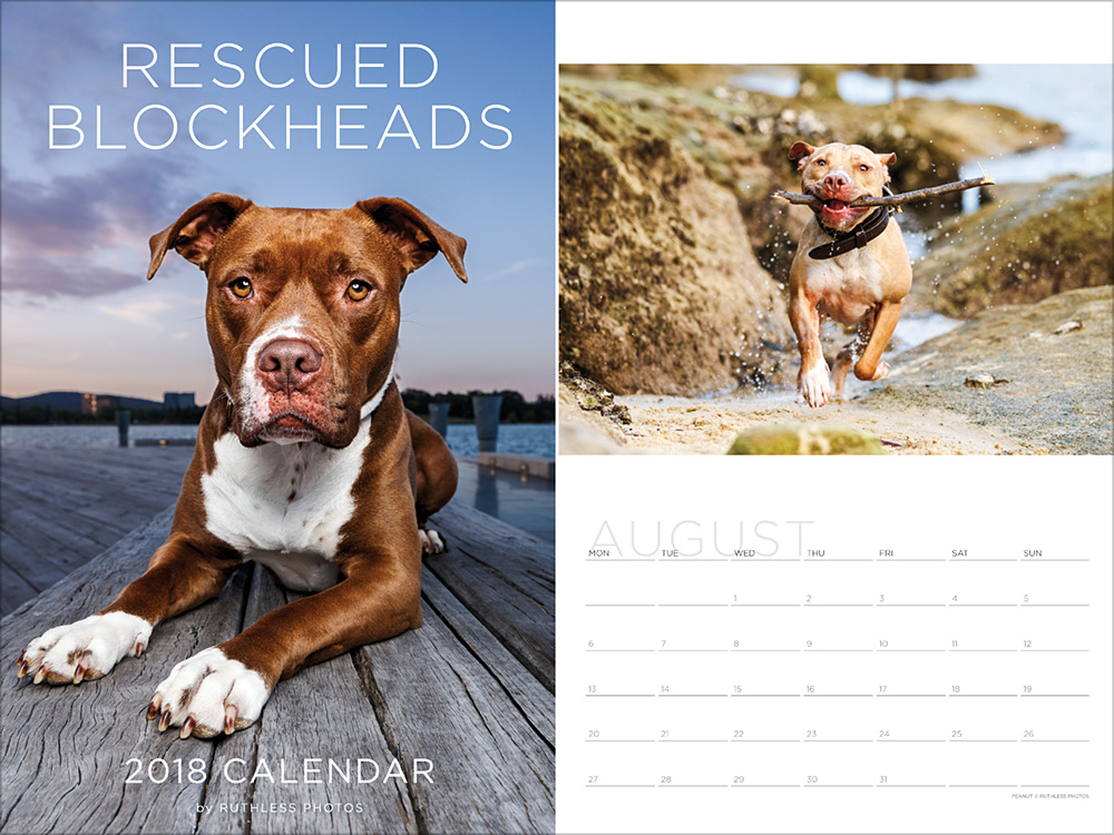 2018 rescue pit bull staffy calendar