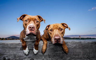 Daxter & Marla – Canberra Dog Photographer