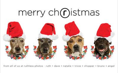 Merry Everything – Sydney Pet Photographer