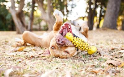 Peanut the Blockhead – Sydney Dog Photos