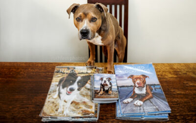 Bruno's birthday wish – charity dog calendars