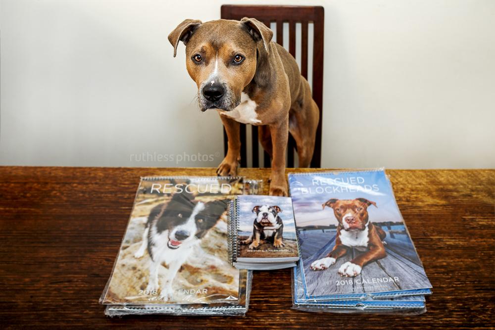 2018 rescue dog calendars