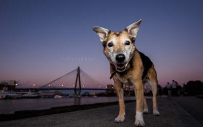 Remembering Ebony – Sydney Dog Photographer