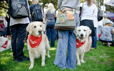 Dog friendly events in Sydney and Canberra in 2018