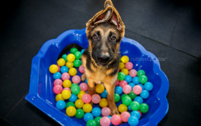 finding the best puppy schools in sydney and canberra