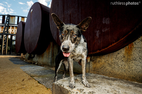 ruthlessphotos-testimonials56