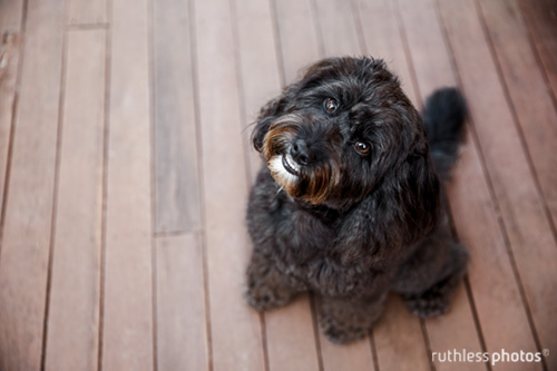 ruthlessphotos-testimonials60