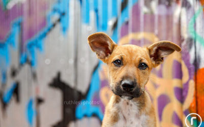 Adopt Me 04.18 – Sydney Rescue Dog Photos