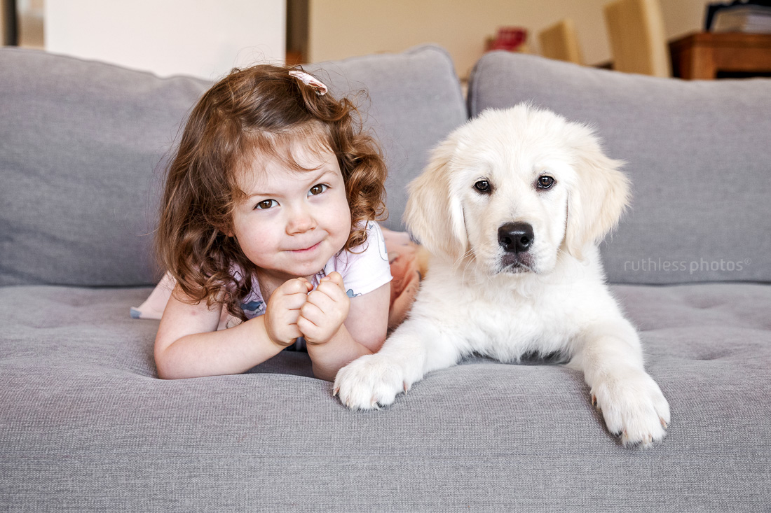 toddler girl lying on sofa with golden retriever puppy