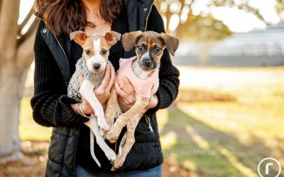 Adopt Me 07.18 – Sydney Dog Photos