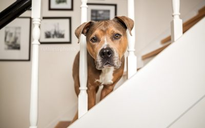 Bruno the Dog's Embark DNA test results