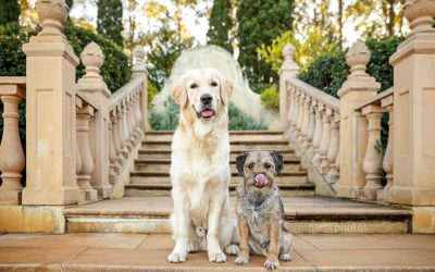 Usha and Alfie – Sydney Dog Photographer