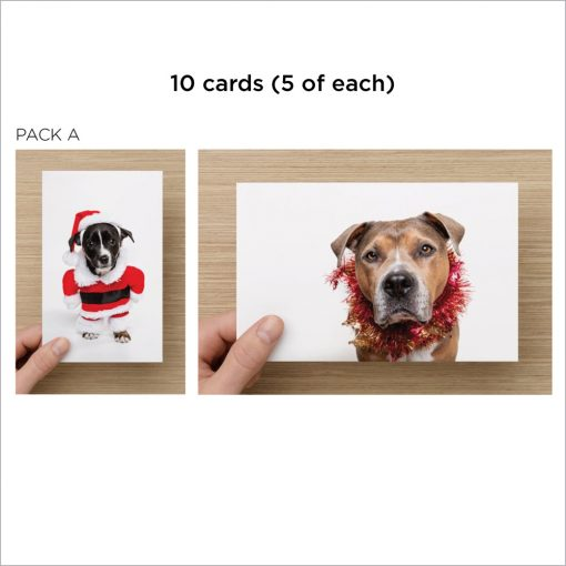 dog charity christmas cards