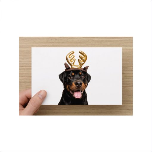 rottweiler charity christmas cards