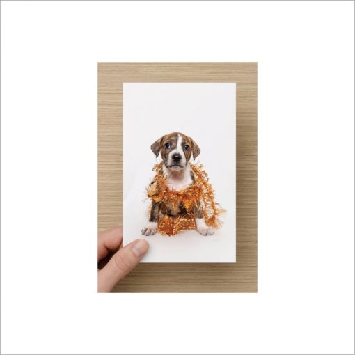 rescue puppy charity christmas cards