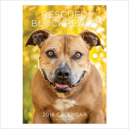 2019 pitbull staffy calendar