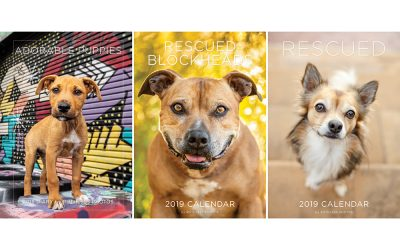 2019 fundraiser calendars, diary and Christmas cards