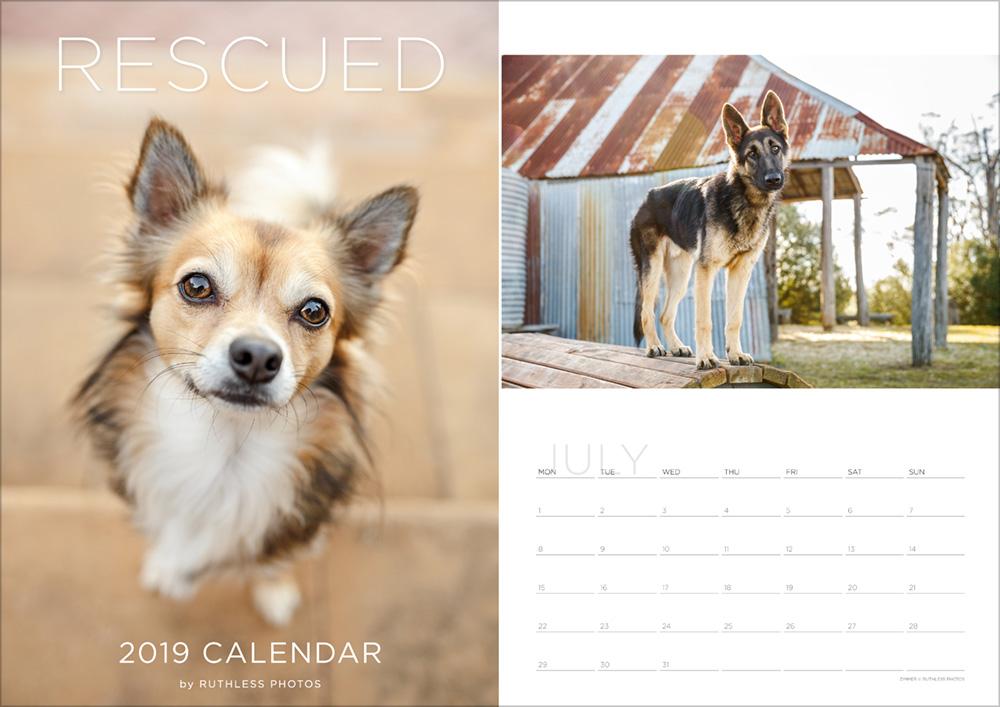 2019 rescue dog calendar