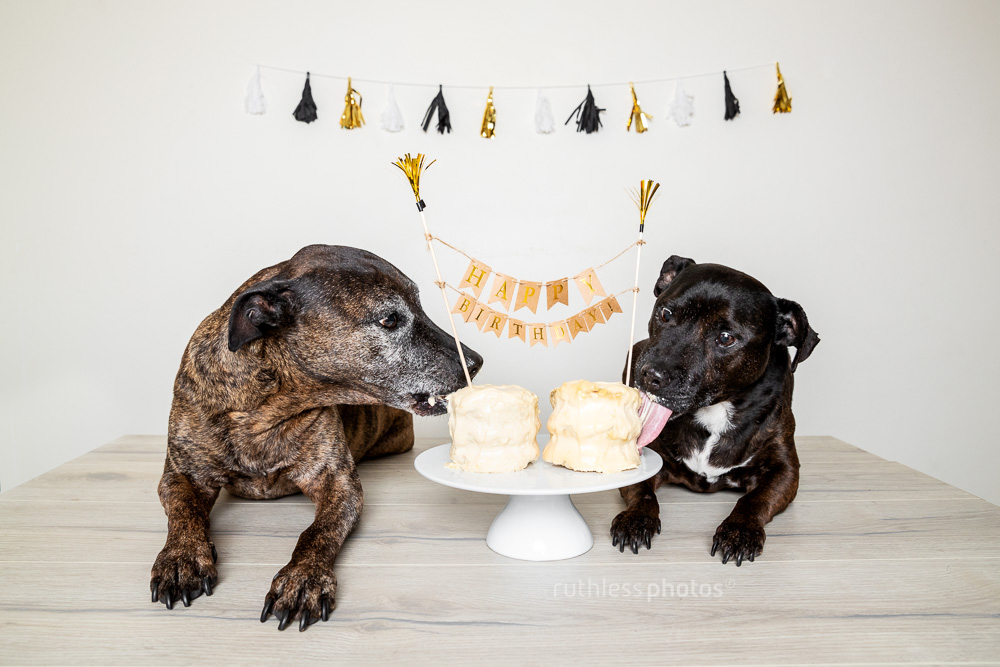 Eating Are Leftover Donuts From My Book Launch With Peanut Butter Cream Cheese And Yoghurt Frosting Luckily Dogs Dont Care What Their Cake Looks Like