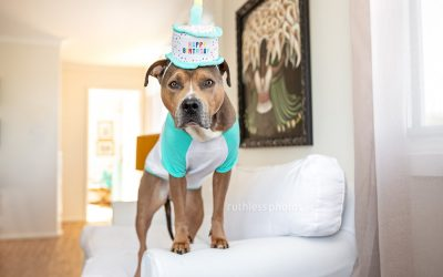 Bruno's 8th birthday – dog costume by Kmart